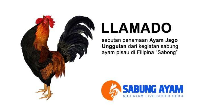 Llamado Sebuah Istilah Dalam Sabong di Filipina
